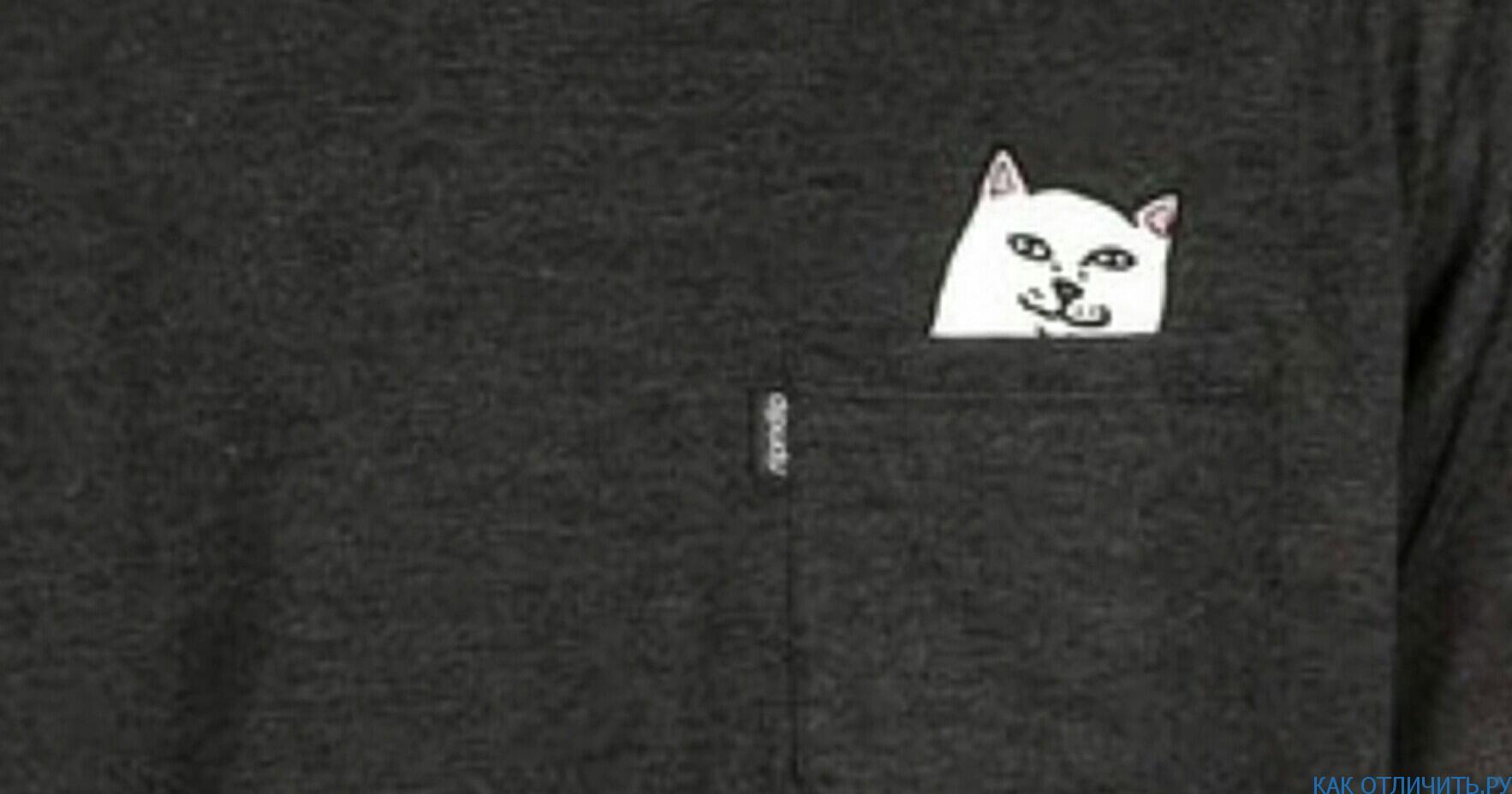 Кот на оригинальной вещи